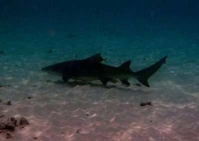 rb-malediven-2014_01