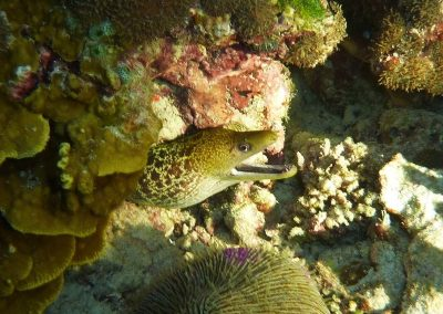 rb-malediven-2014_03