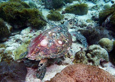 rb-malediven-2014_09