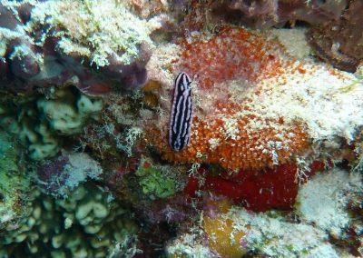 rb-malediven-2014_12