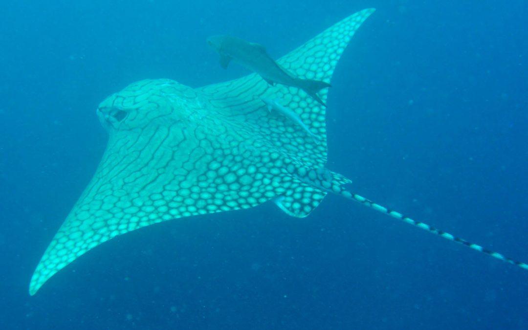 Malediven – Meedhupparu Island 2014