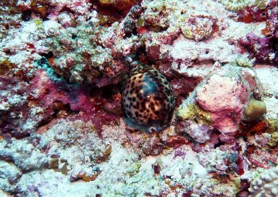 rb-malediven-2014_22
