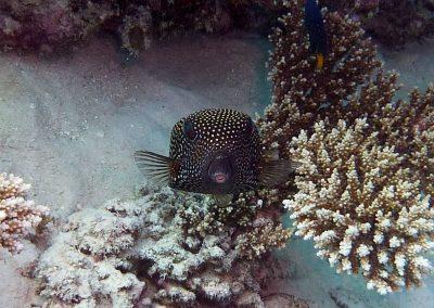 rb-malediven-2014_24