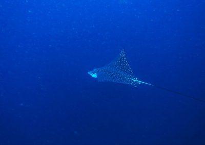 rb-sardine-pr2017__07