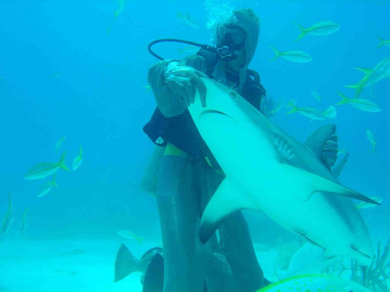 Bahamas – Shark School 2005