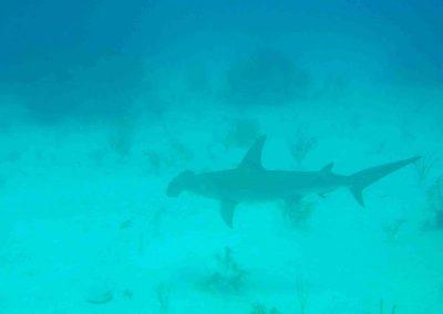 rb-bahamas-2005_07