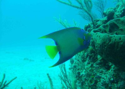 rb-bahamas-2005_09
