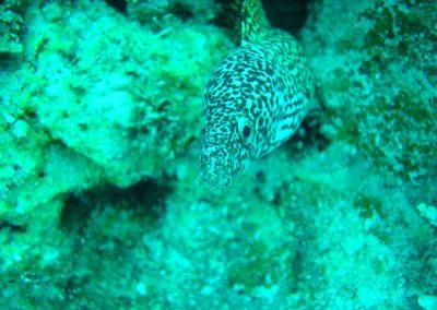 rb-bahamas-2005_13