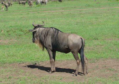 rb-kenia-2006_10