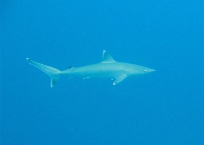 rb-malediven-2006_05