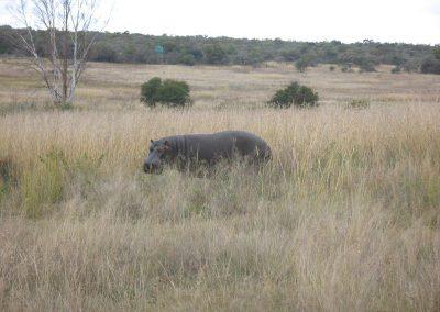 rb-mozambik2008_24
