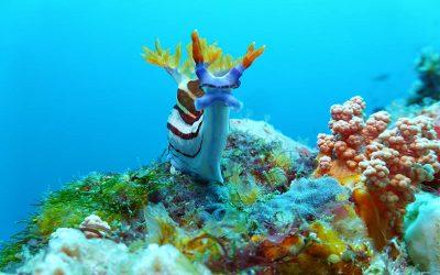 Sumbawa/Indonesien 2019/2020 Kalimaya Dive Resort